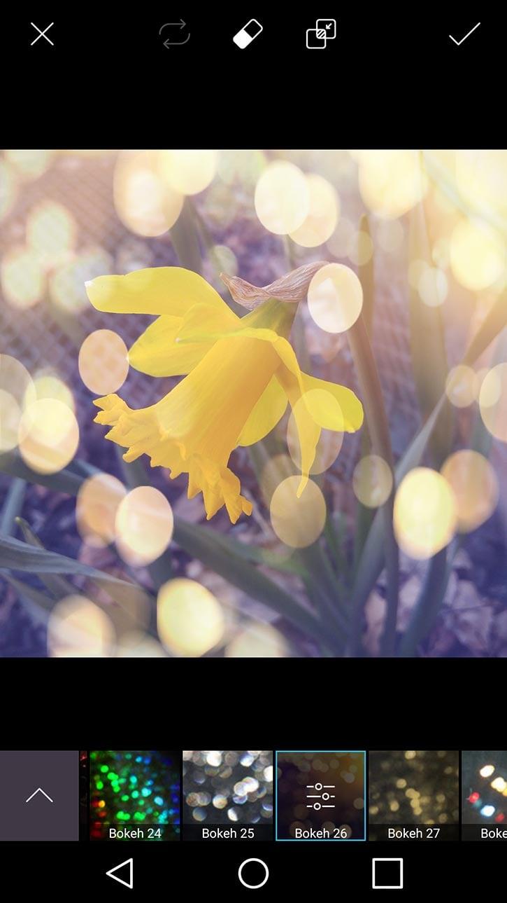3d-photo-daffodil-card-picsart-bokeh26-filter.jpg