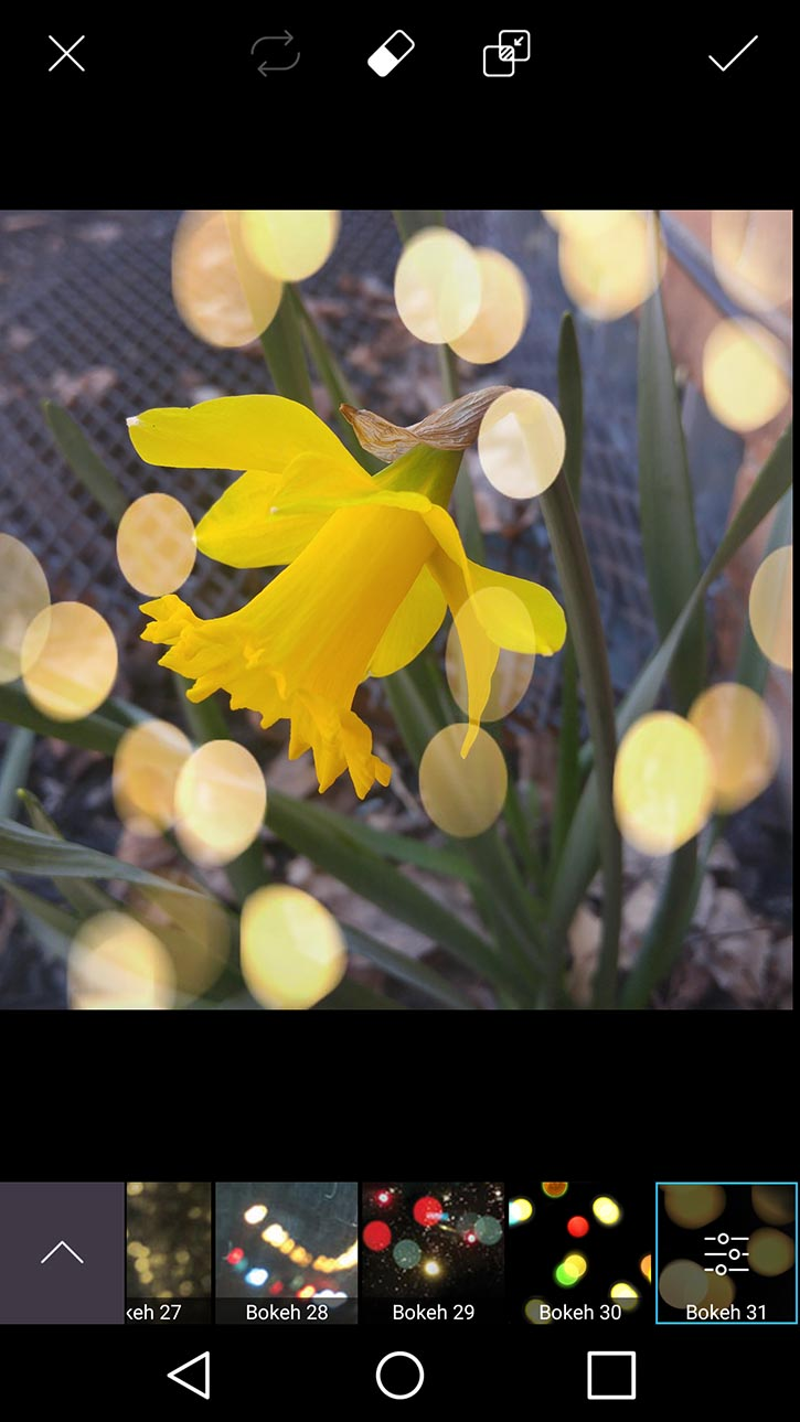 3d-photo-daffodil-card-picsart-bokeh31-filter.jpg