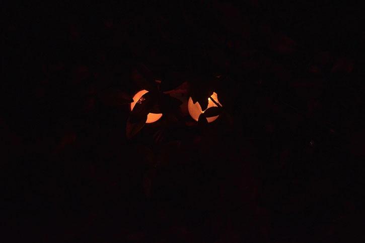 glue-dots-halloween-spooky-eyes-by-janet-trieschman.jpg